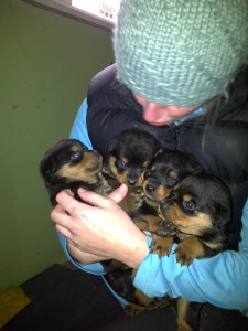 Navan Animal Rescue puppies